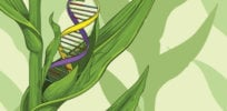 US FDA: Gene-edited crops can have many advantages for consumers