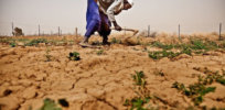 Mark Lynas: Scotland's GMO ban hurts food security in Africa