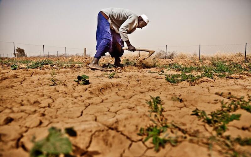 Africa food security GMO 328878