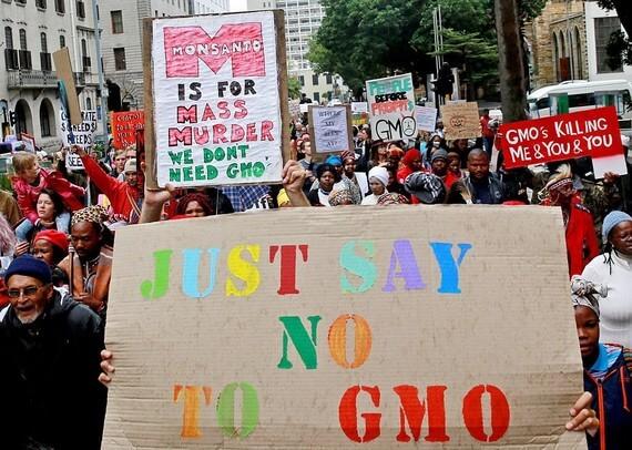 GMO thumb
