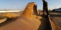 wheat shipment 327327