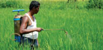Global abstention from pesticides will lead to food shortages, Syngenta says
