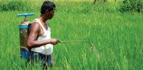 India pesticide 327327