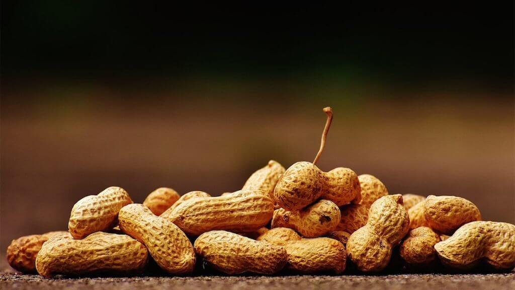 CFEAT Peanuts x