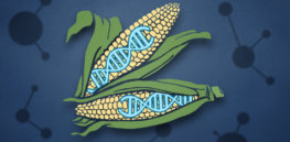 CRISPR superplants e x