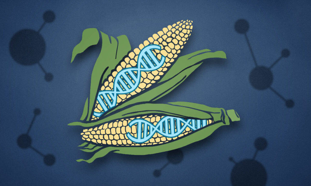 What CRISPR gene editing has taught us about the GMO debate