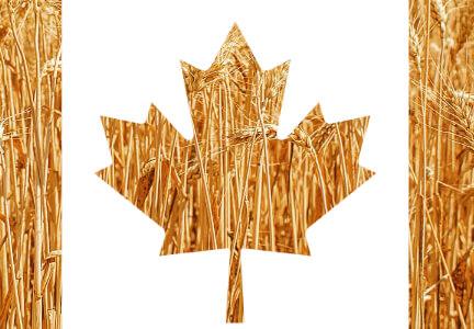 CanadaWheat Embedded