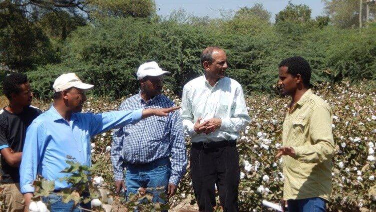 Ethiopia GMO Bt cotton 32737