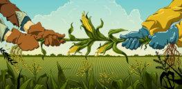 GMO debate 32737