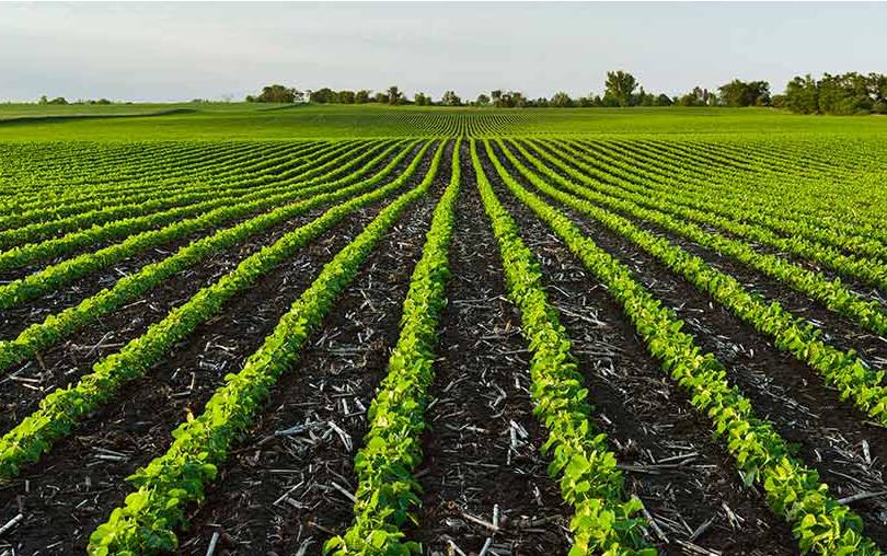 German Soybean Farm Right Sized