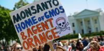 Monsanto Bayer GMO 32838