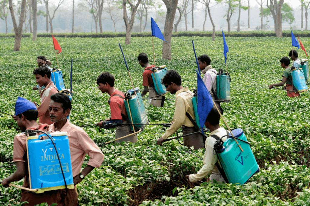 India pesticides 3772