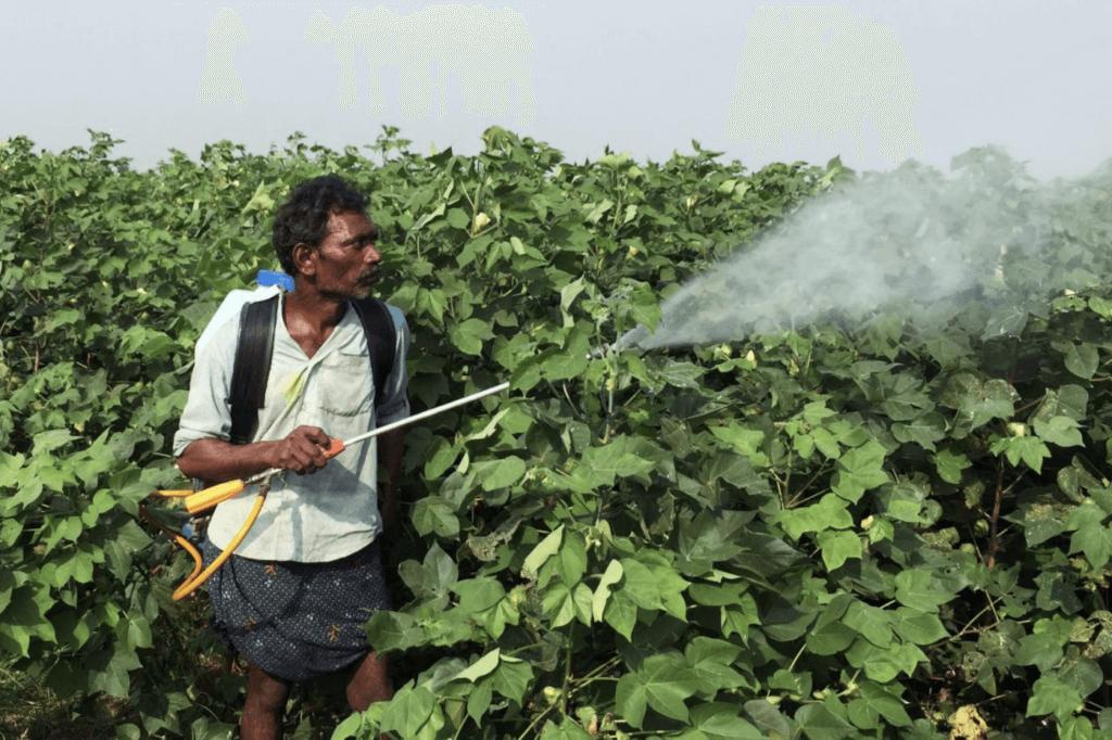 India herbicide cotton GMO 32772
