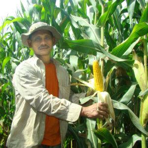 GMO corn farmer 3273278