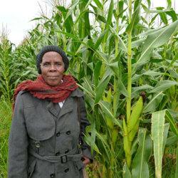 South Africa corn farmer 37237