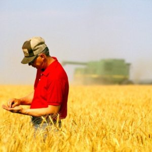 farmer wheat field thinkstock