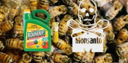 honey bees fungicides