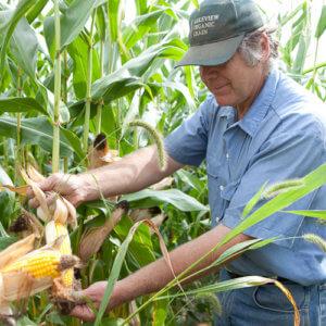 Organic Farmer Klaas Martens 3782378