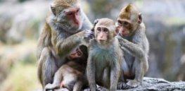 monkeys 7 2 18