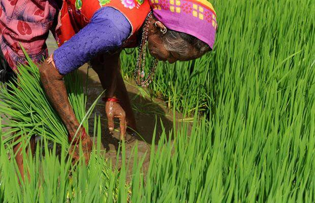 rice i