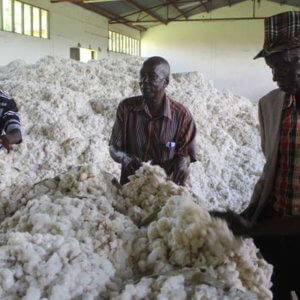 Kenya cotton 327237
