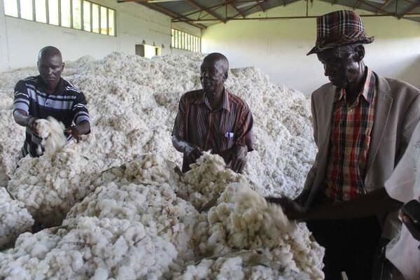 Kenya cotton 327237