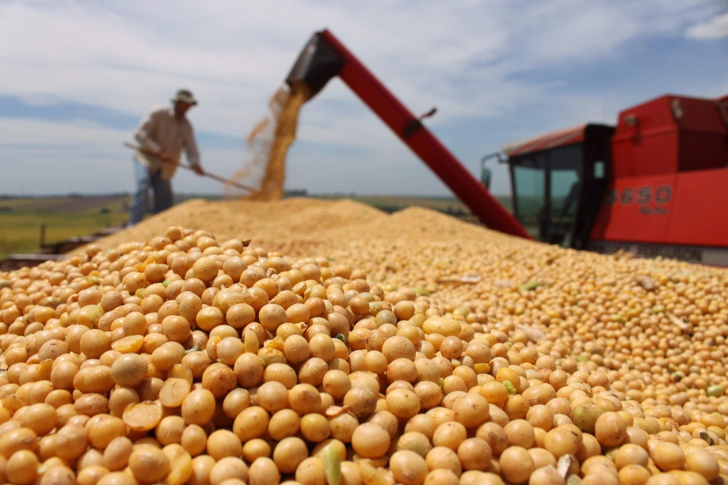 Brazil GMO soybeans 4277