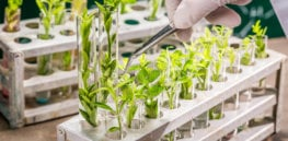 university lab exploring new methods plant breeding closeup