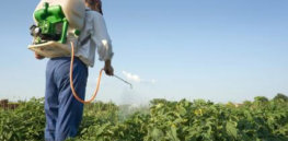 Pesticide Spraying234234
