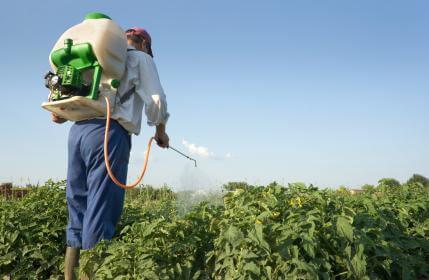 Pesticide Spraying234234