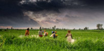 Agriculture and rural farms of India