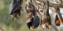 7-15-2018 bats-cv-1500x632jpg