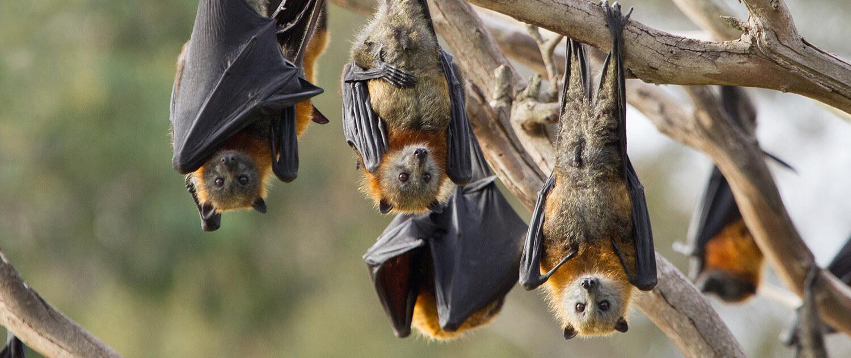 Bats 89