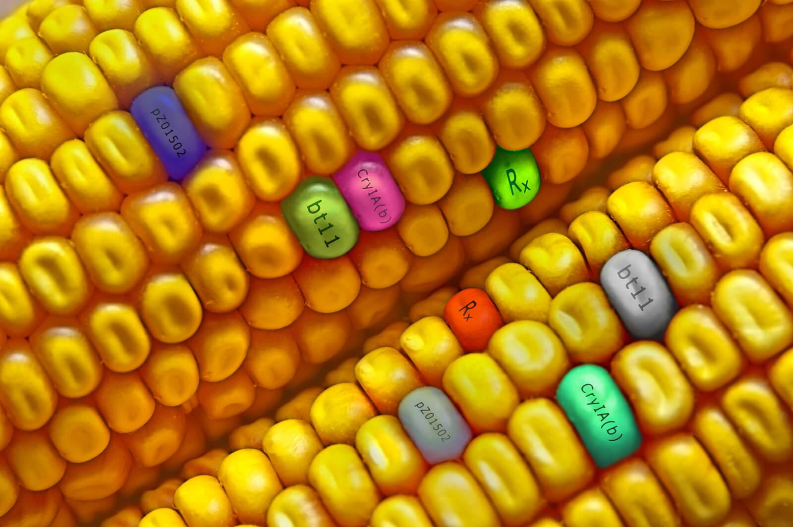 GMO Vs Gene Editing