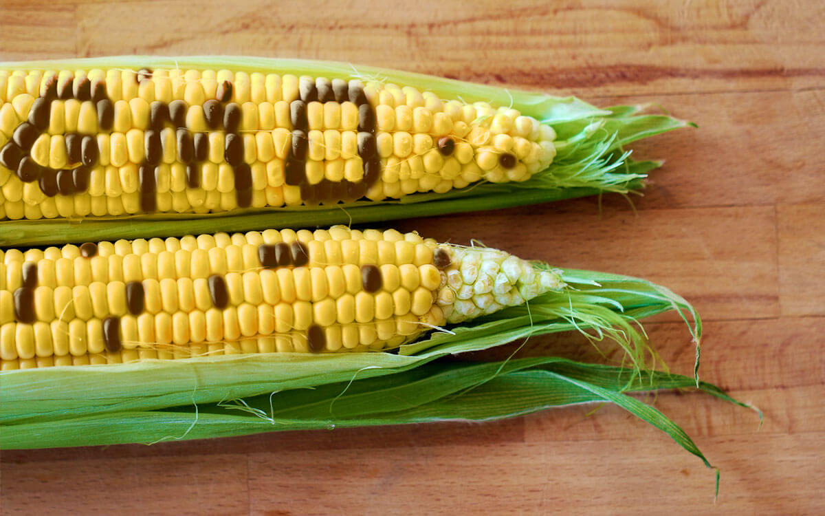 Digesting GMO and non-GMO foods—why your body can't tell the