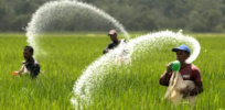 agriculture philippines