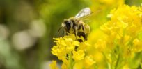 Several European Union nations rebuked over efforts to sidestep neonicotinoid ban