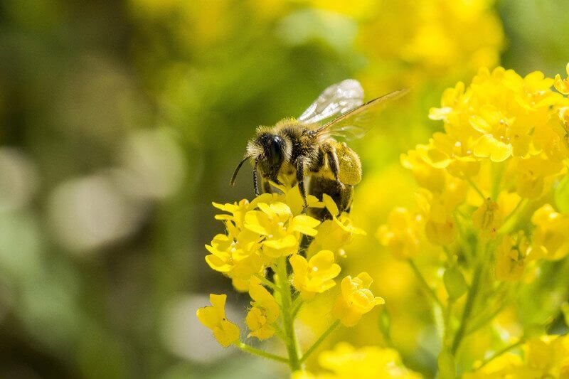 Canada will phase out two kinds of neonicotinoids in 2021, citing harm to bee populations
