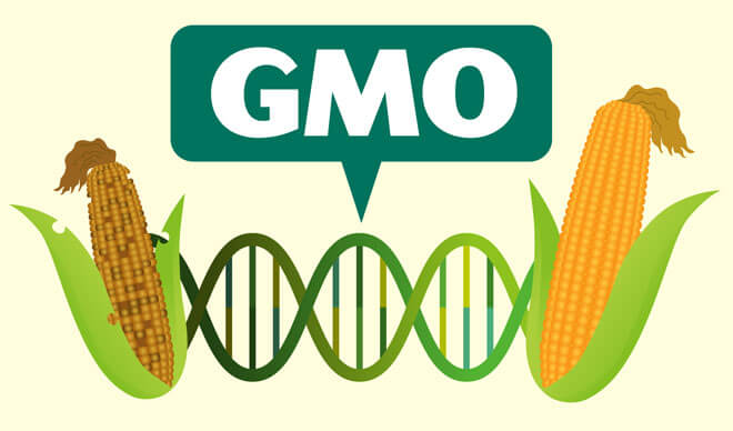 Here's everything you need to know about GMO crops | Genetic ...