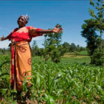 Viewpoint: If Ghana embraces GMOs, farmers could save nation's floundering agricultural sector
