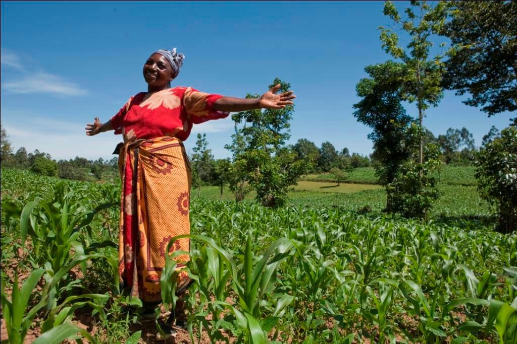 Ghana Farmer92323782