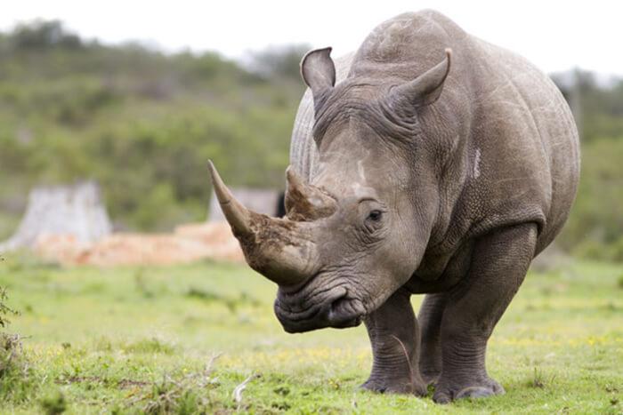 rhino 7 3 18 1