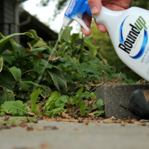 roundup spray
