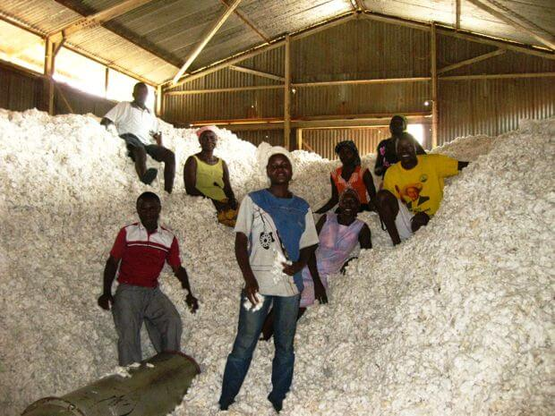 uganda cotton2229999