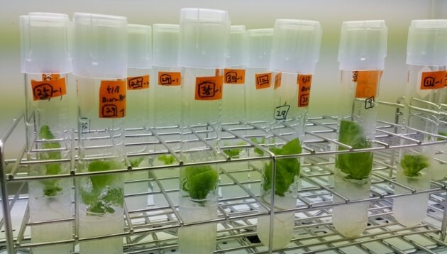 Biotech startups race against 'Big Ag' to develop gene-edited crops
