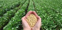 Growing GMO soybeans in South America cut greenhouse gas emissions equivalent to removing 3.3 million cars from the road
