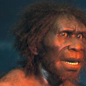 homo erectus e