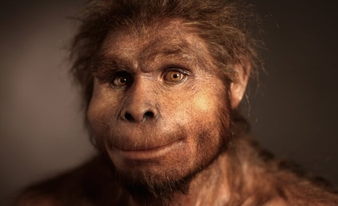 Image result for homoerectus