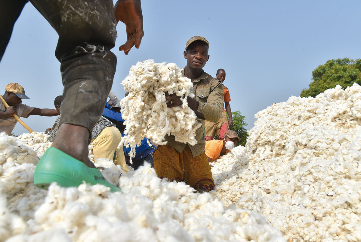 Swaziland finds success with GMO cotton