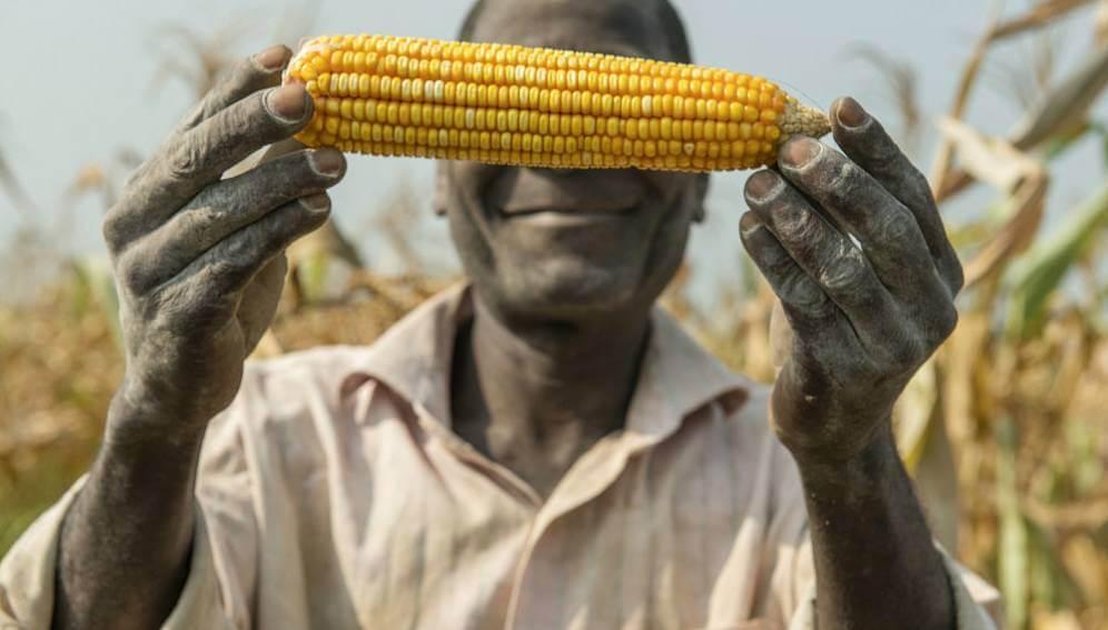 In landmark case, activist attempt to block introduction of GMO corn dismissed by Nigerian High Court